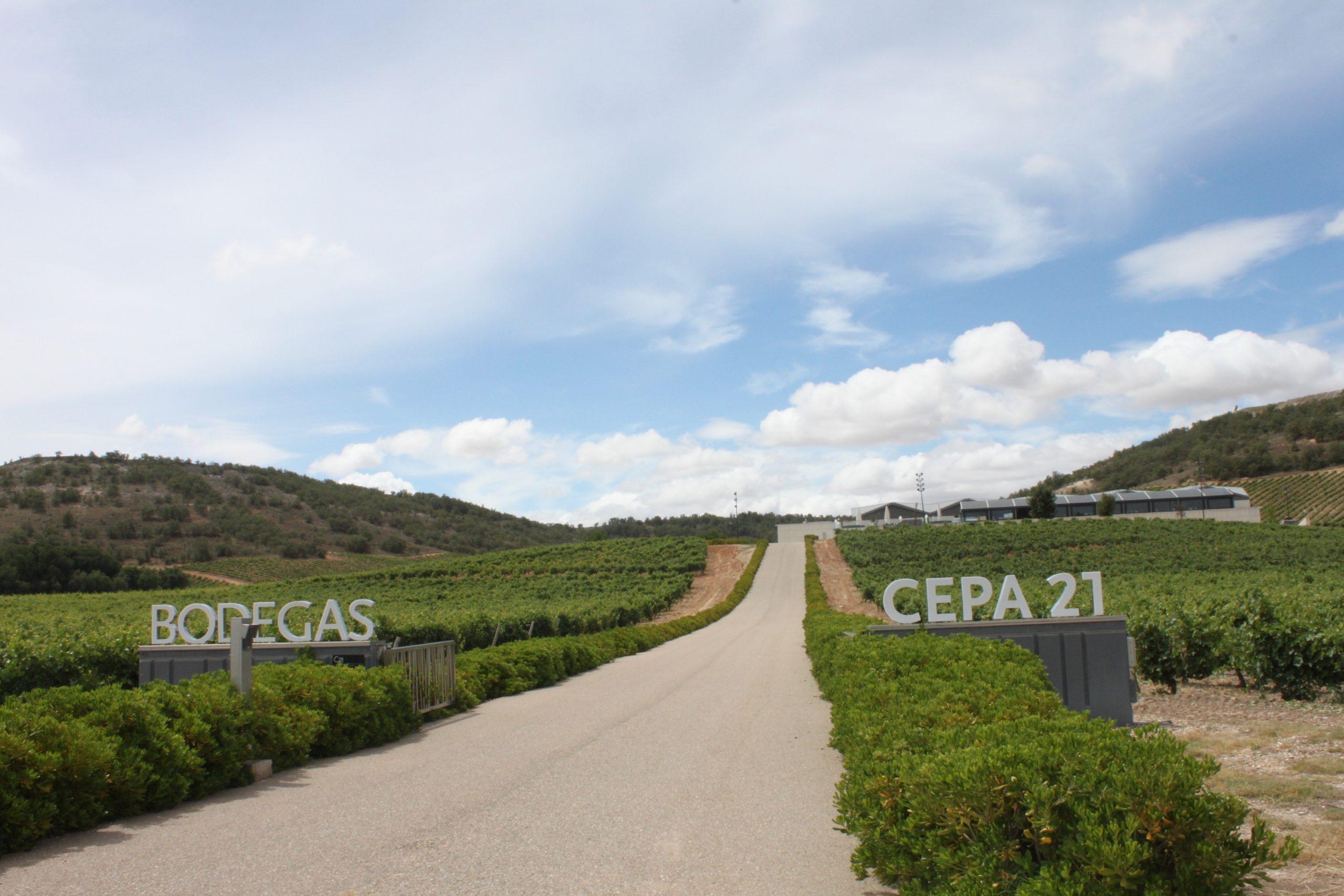 Informe Ambiental Bodegas Cepa 21 – 2019